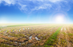 Paddy field with sunrise background Stock Images