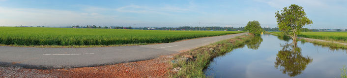 Paddy field with sunrise background. Panorama of paddy field with sunrise background Stock Photo