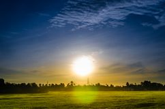 Paddy field on sunrise background. Paddy field touched by soft golden sunlight during the sunrise with lovely sun flare effect Stock Image