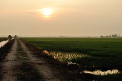 Paddy field sunset Stock Image