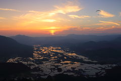 Paddy field and sunset stock images