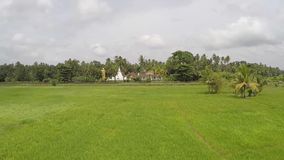 Paddy field and temple video copter shot stock video footage