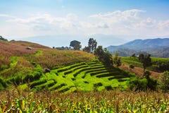Paddy Field a terrazze nel villaggio dell'Mae-inceppamento Fotografia Stock