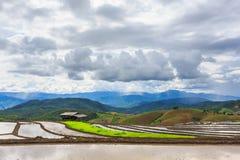 Paddy Field a terrazze nel villaggio dell'Mae-inceppamento, provincia di Chaingmai, T Fotografia Stock