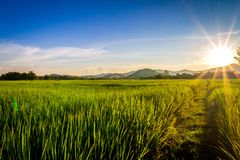 Paddy field. And twilight sky royalty free stock photography