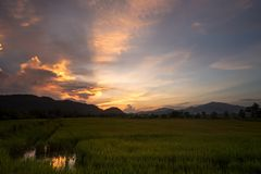 Paddy field with twilight sky. Stock Photography