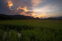 Paddy field with twilight sky. Royalty Free Stock Photography