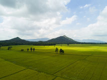 Paddy field with two moutains behind. Very Large paddy field with two mountain as a background Stock Photos