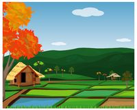 Paddy field vector design. Large paddy field vector design stock illustration