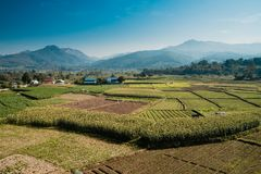 Paddy field view with water wheel in Nan, Thailand. royalty free stock photo