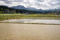 Paddy field in front of mountain. Paddy field which newly planted seedlings in front of mountain range in Itoigawa, Niigata Royalty Free Stock Photo