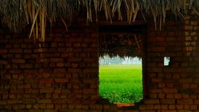 Paddy field. Through the window of a old rural house in southindia Royalty Free Stock Image