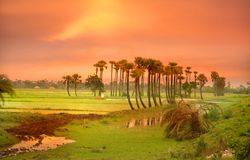 Paddy fields Royalty Free Stock Image