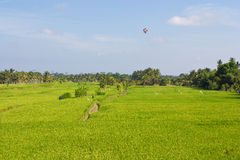 Paddy fields Royalty Free Stock Photo