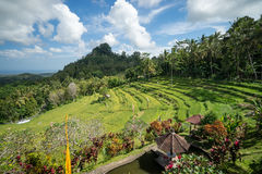 Paddy fields of Bali, Indonesia. BALI, INDONESIA - 19TH JUNE 2015; Near the cultural village of Ubud is an area known as Tegallalang that boasts the most Stock Photo