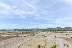 Paddy fields Royalty Free Stock Photos