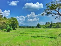 Paddy fields and blue sky Stock Image