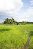 Paddy fields, coconut trees, a gazebo for shelter, and the rain clouds are forming, natural, agriculture. Stock Photo