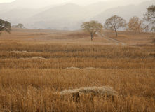 Paddy fields after harvest. After harvest, the fall of farmland Royalty Free Stock Image