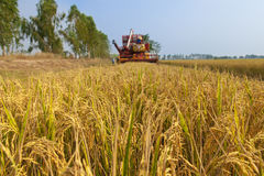 Paddy fields and Harvesting machine in countryside. Paddy fields and Harvesting machine in countryside Thailand Royalty Free Stock Photo
