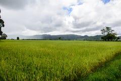 Paddy Fields in Kayah-Zustand, Myanmar Lizenzfreie Stockbilder