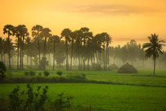Paddy fields landscape in Andhra pradesh. India Stock Images