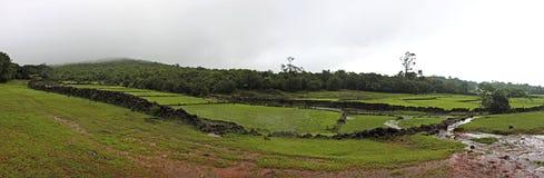 Paddy fields at monsoon season Stock Photo
