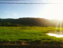 Paddy fields Royalty Free Stock Images