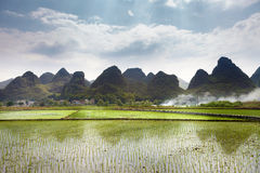 Paddy fields in  mountains region Royalty Free Stock Photo