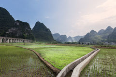 Paddy fields in  mountains region Stock Photo