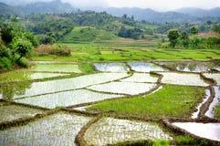 Paddy fields. Stock Image