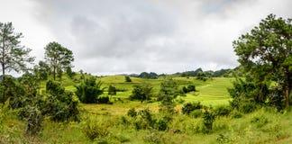 Paddy Fields nahe Kayan-Dorf, Kayah-Zustand, Myanmar Stockfoto