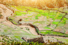 Paddy fields in Nepal Royalty Free Stock Images