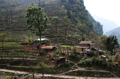 Paddy fields - Nepal Stock Images
