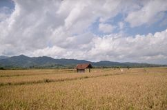 Paddy fields Purworejo Indonesia. Paddy fields in brenggong village Purworejo Indonesia Stock Photography