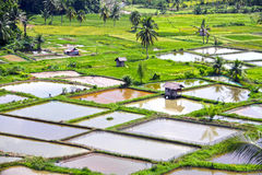 PADDY FIELDS. The paddy fields or rice fields are located near Bukittinggi in West Sumatra, Indonesia stock photos