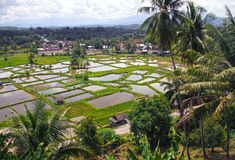 PADDY FIELDS. The paddy fields or rice fields are located near Bukittinggi in West Sumatra, Indonesia Royalty Free Stock Photos