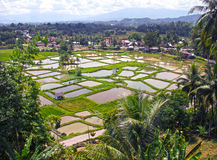 PADDY FIELDS. The paddy fields or rice fields are located near Bukittinggi in West Sumatra, Indonesia Royalty Free Stock Photography