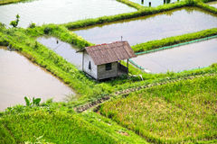 PADDY FIELDS. The paddy fields or rice fields are located near Bukittinggi in West Sumatra, Indonesia. Small huts can be found scattered between the paddies Royalty Free Stock Photos