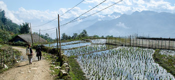 Paddy fields in Sa Pa Royalty Free Stock Photos