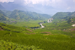 Paddy fields Stock Images