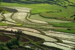 The paddy fields, Sumatra Stock Image
