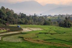 The paddy fields, Sumatra Stock Photo