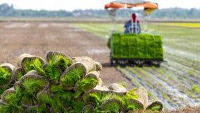 Paddy fields at Sungai Besar, Malaysia. SELANGOR, MALAYSIA - 8TH APRIL 2015; Farmer planting a paddy tillers at Sungai Besar, Malaysia Royalty Free Stock Photo