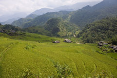 Paddy fields, village and a jungle Stock Image
