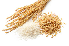 Paddy with grains royalty free stock photography