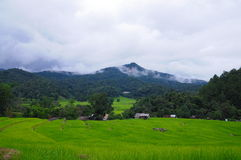 Paddy,Green field and Cottage. Green field Beautiful Paddy in Thailand Stock Image