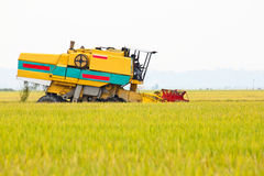 Paddy Harvester on Paddy Field Royalty Free Stock Images