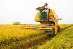 Paddy Harvesters on Paddy Field Royalty Free Stock Photo