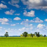 Paddy land Stock Photo